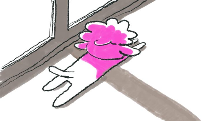 トイプードルひなたぼっこ