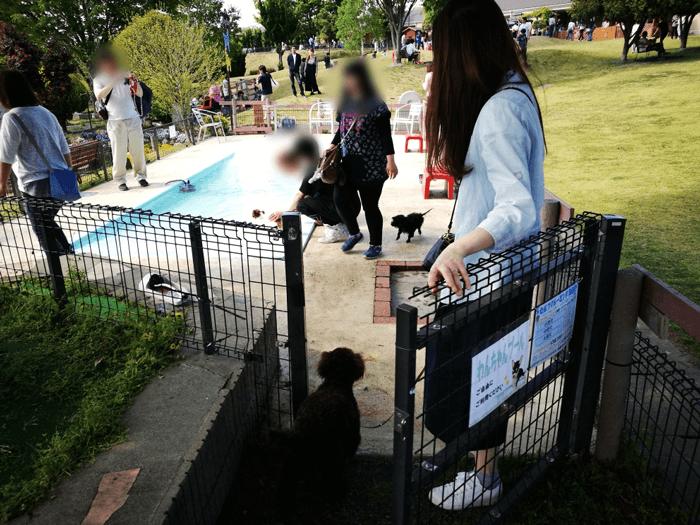 世界の名犬牧場プール