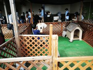 世界の名犬牧場犬触れ合いコーナー02