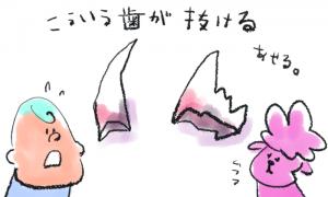 トイプードル歯が抜ける