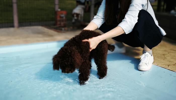 世界の名犬牧場プールにびびる犬