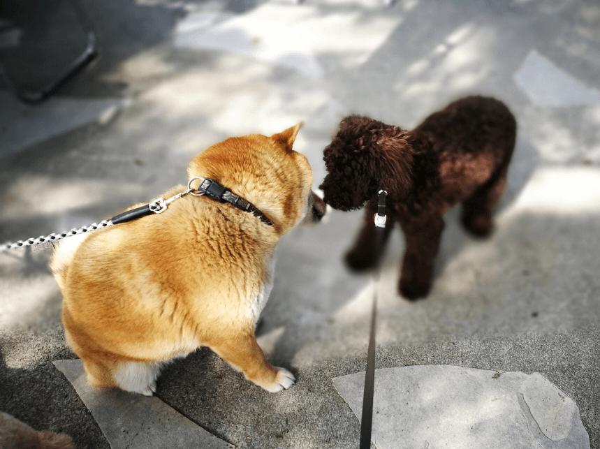 世界の名犬牧場犬コミュニケーション