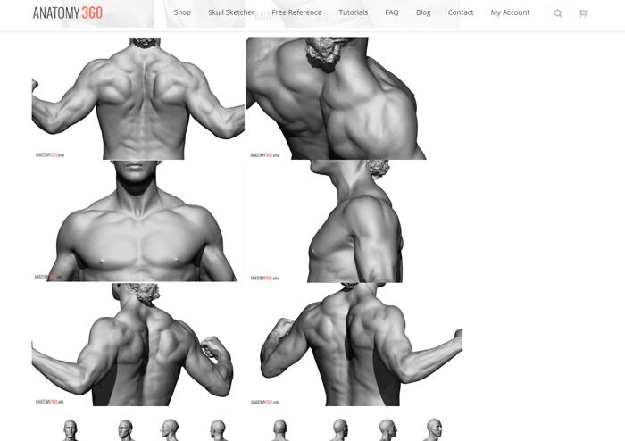 anatomy360_free2